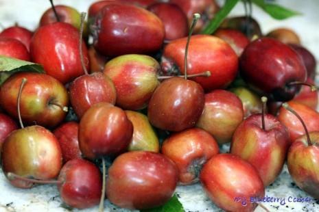 Rajska nalewka jabłkowa